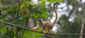 Monkey 1 by Poulus1967