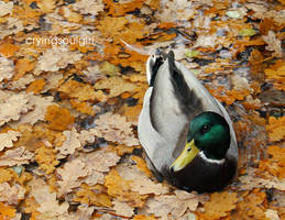 .: Swimming in Autumn :. by CryingSoulGirl
