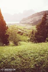 italian grass (Roadtrip to Tuscany) by mystic-darkness