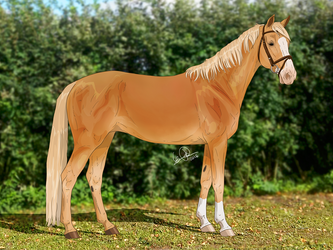 Finnish warmblood mare by freehorselinearts
