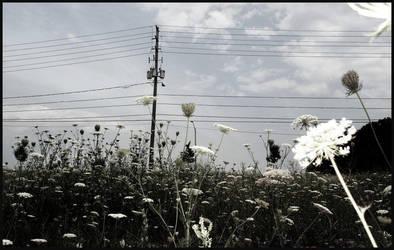 Flower Fields by jasrghtyik