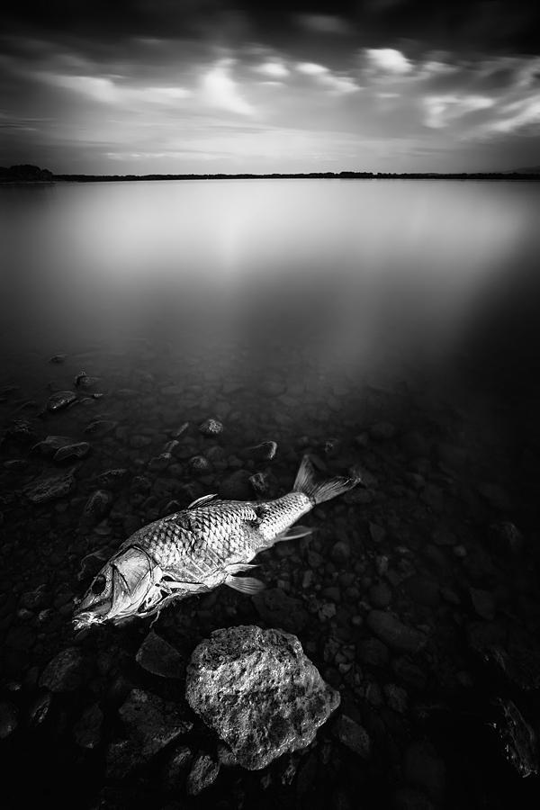Desolation by Durdenyr