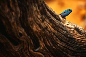 Tree Agama by Durdenyr