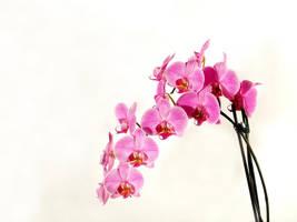 Flower by petnje