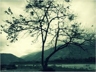 Common Tree by leozerosty