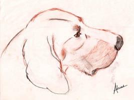 Coonhound dog 2 by raidan1280