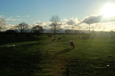 Farm 2 by sayra