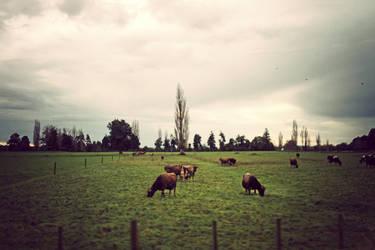 Farm by sayra