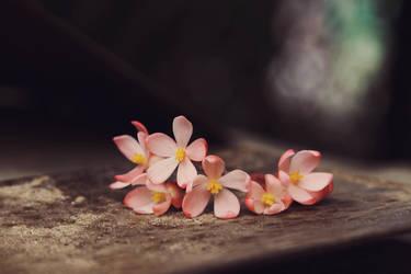 Begonia by sayra