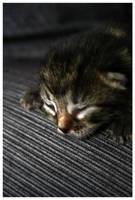 kittie by sayra