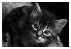 kitten 2 by sayra
