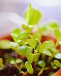 Grow by Zilfana-9
