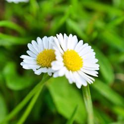 Flower hug by Zilfana-9