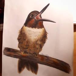 Bird by Zilfana-9