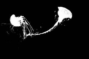Jellyfish II by MetaAnomie