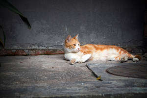 Street Cat by MetaAnomie