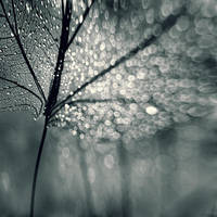 Leaf by Mordsitha