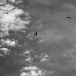 Fly High by Anj3lla