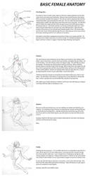 Basics of Female Anatomy by liliesformary