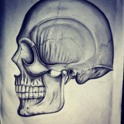 Skull, Profile View by RicGrayDesign