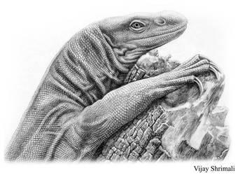 monitor lizard by vijayshrimali-art