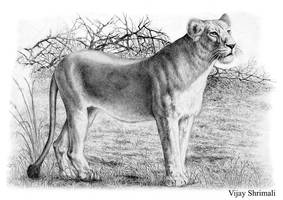 asiatic liones by vijayshrimali-art