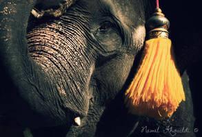 War Elephant by NawalAckermann