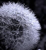 Crystal Buttons by alvarola