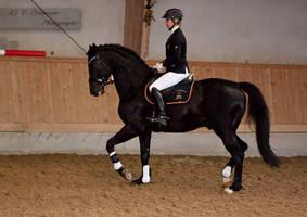 Stallion Presenation_15 by CalyHoney