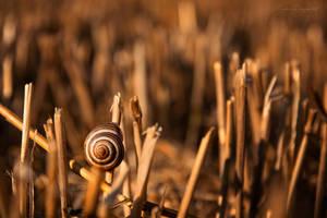Snail on the stubble by LiaCam