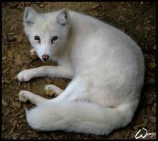I am unique fox by woxys