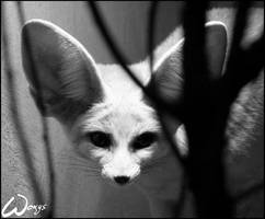 Fennec fox ghost by woxys