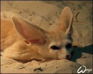 Fennec fox has killing sight by woxys