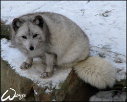 Snow makes me even cuter by woxys