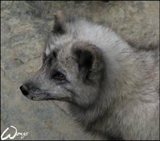 Foxy profile by woxys