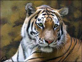 Amur tiger: striped lady by woxys