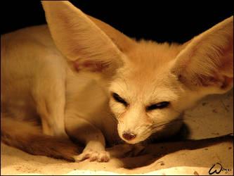 Fennec fox: evil eyes by woxys