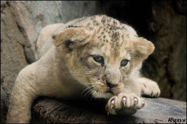 Baby lion: I waaaaant by woxys