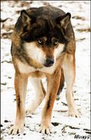 Lobo, the legend by woxys