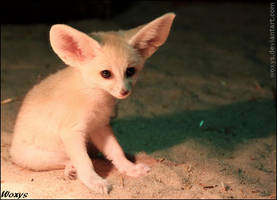 Moment for a baby fennec fox by woxys