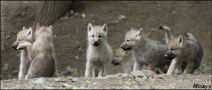 Mafia clan of baby wolves by woxys