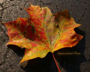 Autumn Leaves Wallpaper 3 by KWilliamsPhoto