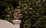 Squirrel On A Post w by KWilliamsPhoto