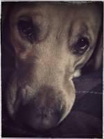 Puppy Dog Eyes by KWilliamsPhoto