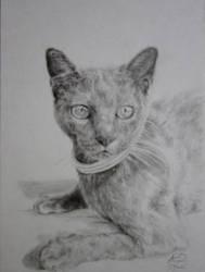 Cat portrait by Artist-AbigailMarie