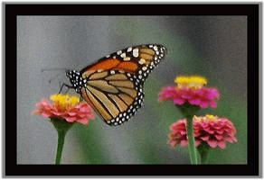 Monarch and Zinnias-A Painting by LadyAliceofOz