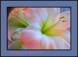 Amaryllis Beauties by LadyAliceofOz
