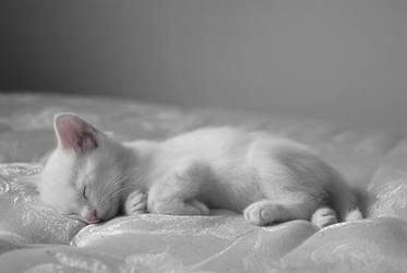 Kitten by inlove2706