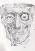 Anatomy Study - Cranium 1 by Helen-Baq