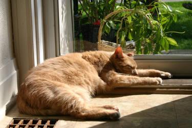 Oliver Sunbathing by Catsarah